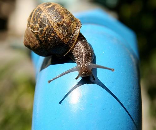 slow.snail.jpg